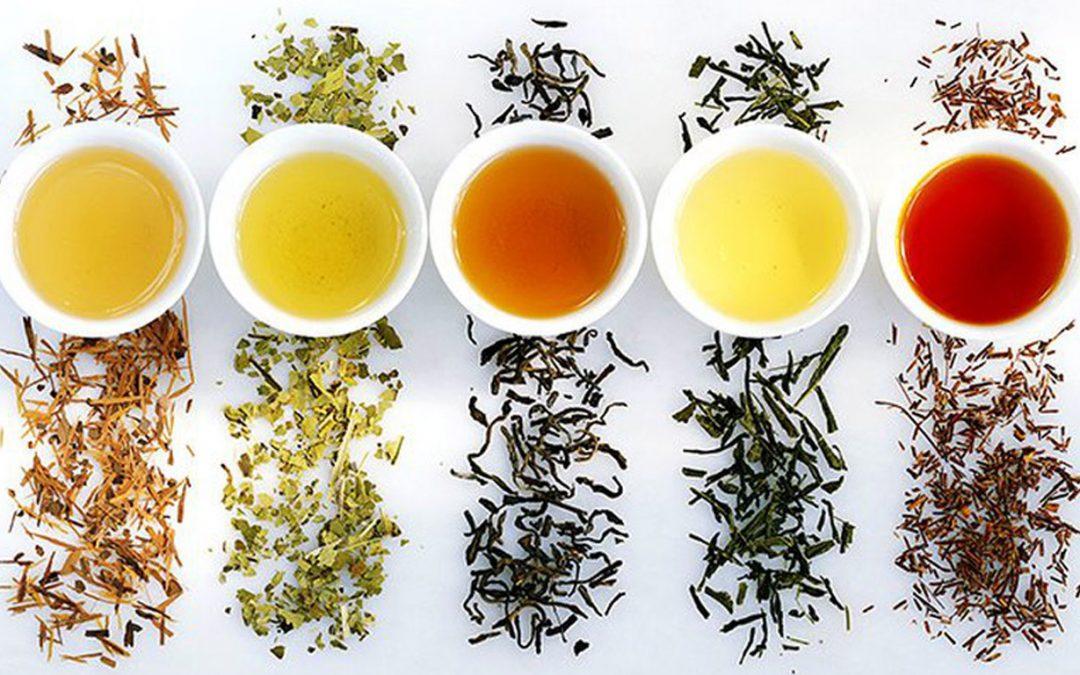 phân loại trà cơ bản.